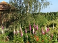 Garden_WP