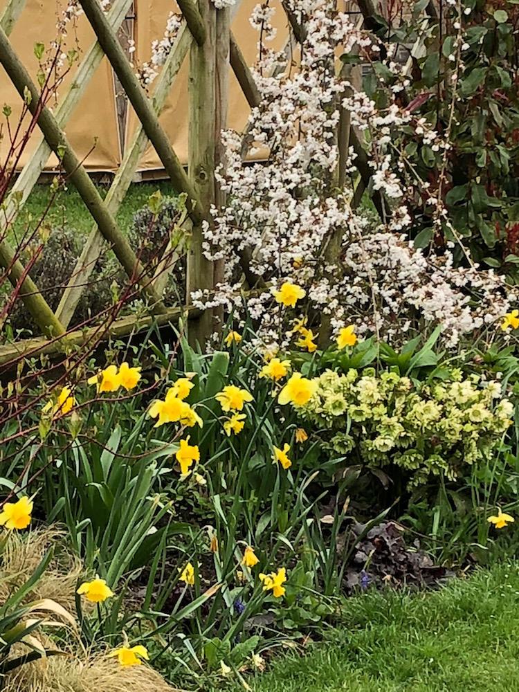daffodilsborrowers